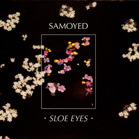 Samoyed - Sloe Eyes